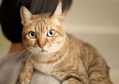 Answers: What Dry Food Does to Your Cat's Fur