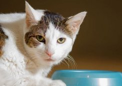 Answers: Why Won't My Cat Eat?