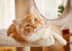 Calcium Supplements in Homemade Cat Food